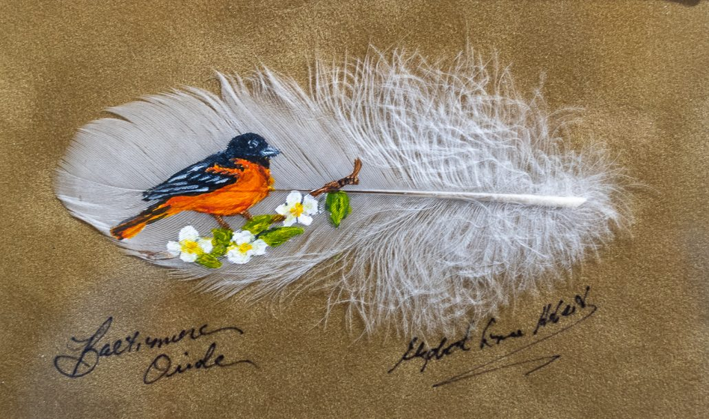 Baltimore Oriole on a feather - Betty Hebert