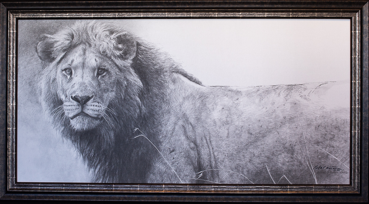 The Warrior Lion - Robert Bateman at The Gallery Upstairs