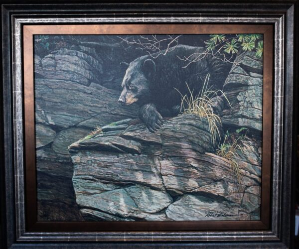 Watchful Repose Black Bear by Robert Bateman available at The Gallery Upstairs
