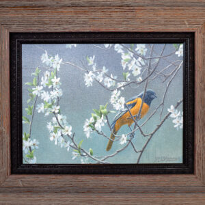 Baltimore Oriole and plum blossoms - framed canvas by nature artist Robert Bateman