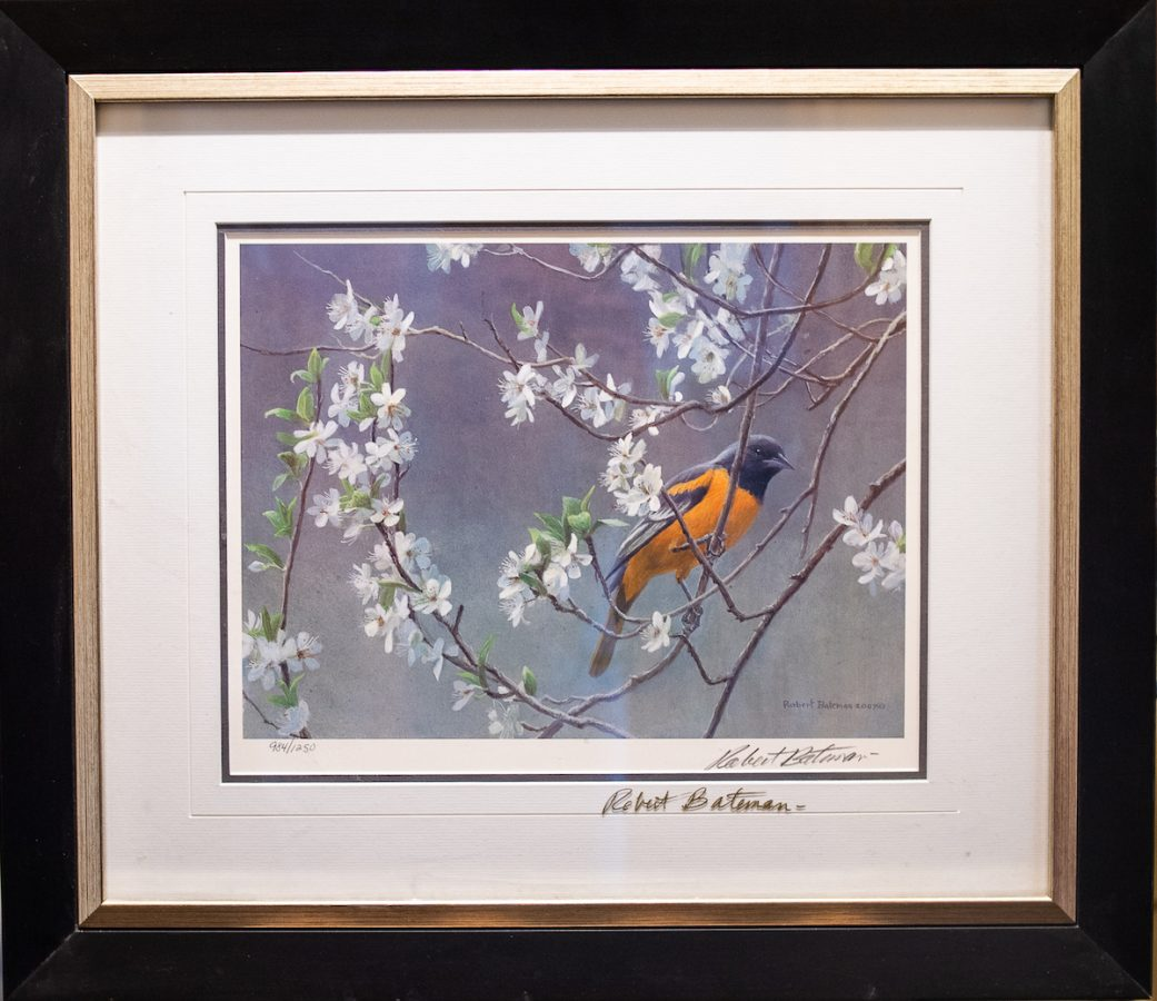 baltimore oriole and plum blossoms - framed print signed by the artist Robert Bateman