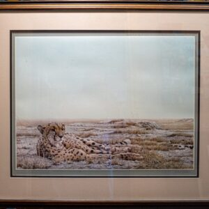 cheetah siesta print by nature artist Robert Bateman