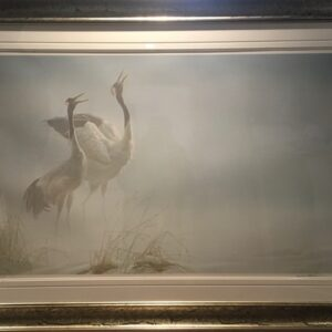 cries of courtship by Robert Bateman