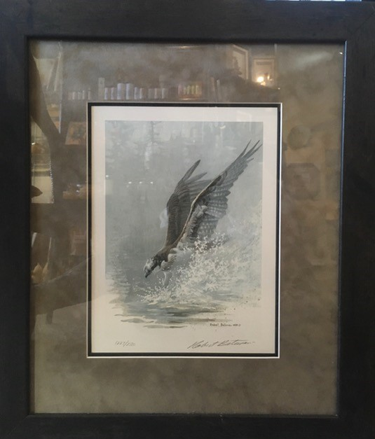 lunging osprey framed print from nature artist Robert Bateman