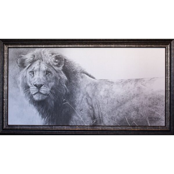 The Warrior Lion print by artist Robert Bateman
