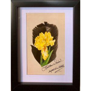Yellow Iris by artist Betty Hebert